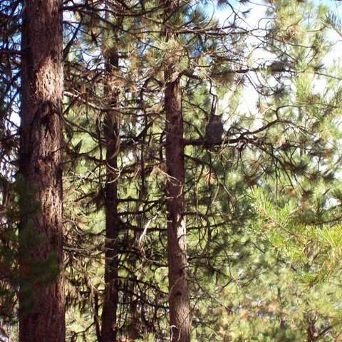 Judge stops illegal old growth logging in the Deschutes river basin