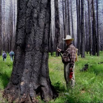 Ensuring Healthy Forests for Future Generations
