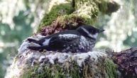 Timber Industry Effort to Drop Protections for Seabird Rejected