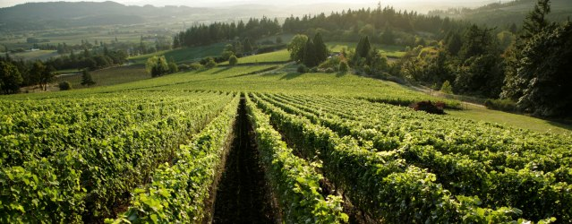 Farmers & Vintners Cheer Ruling Protecting Oregon Wine Country