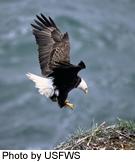 Oregon's Wild Coast Inspires Protection
