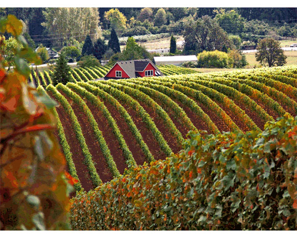 Settlement Protects Oregon Wine Country