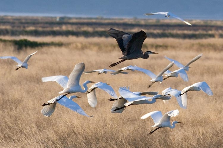 Demanding Protection for Klamath Basin Wildlife Refuges
