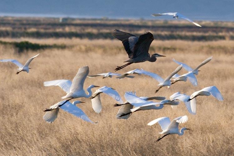 Demanding Protection for Klamath Basin Wildlife Refuges