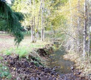 Bear Creek in Molalla, Oregon. Photo by Susan Hansen.