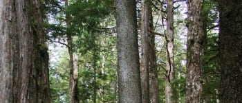 Tongass Banner 1