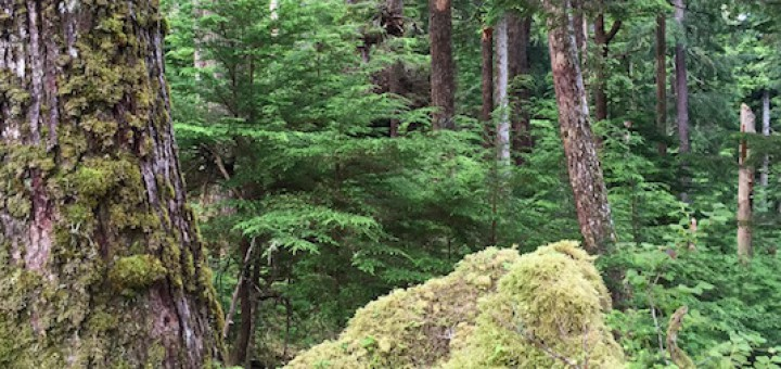 Tongass National Forest Old-Growth Logging