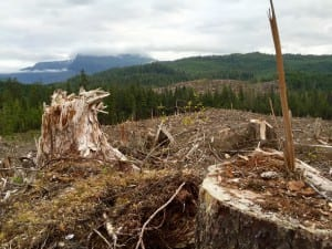 Letter from Tongass-Clearcut II