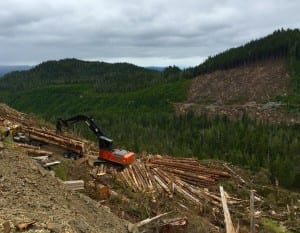 Letter from the Tongass Clearcut