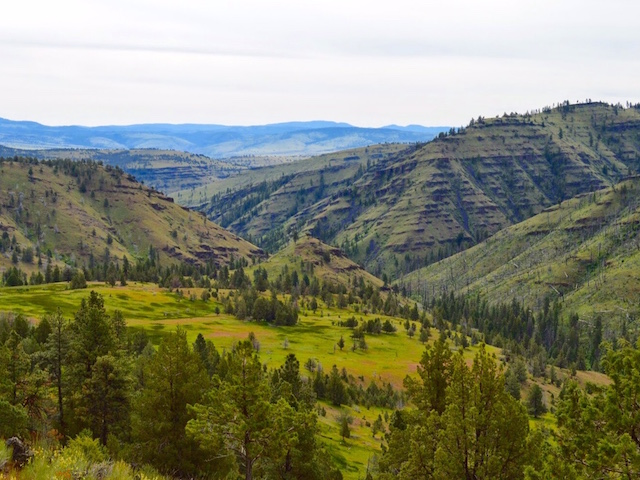 Lawsuit Launched to Prevent Damaging Off-Road Vehicle Project on Central Oregon Forest