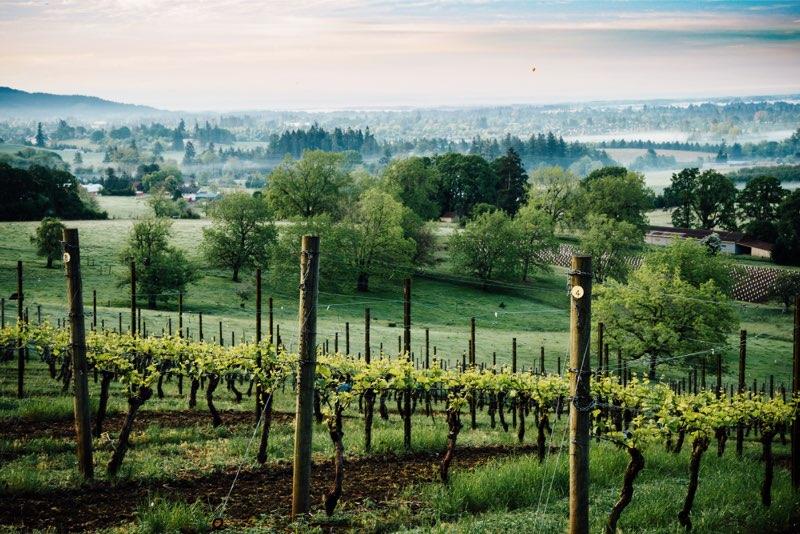 winery yamhill co