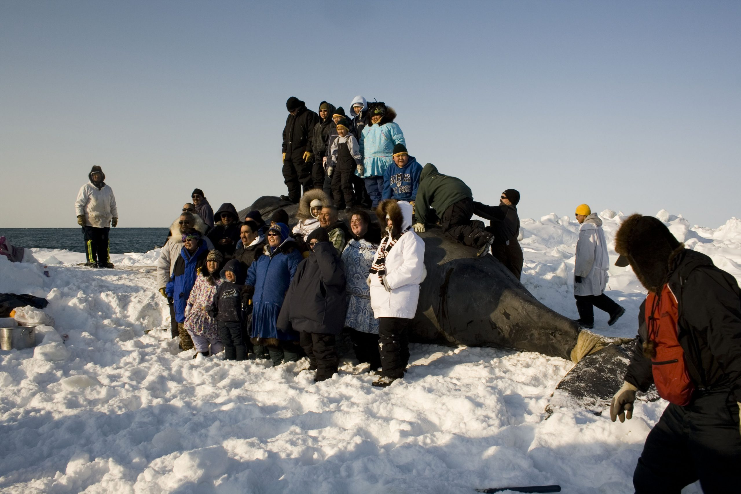 Pulling Whale on Ice_2