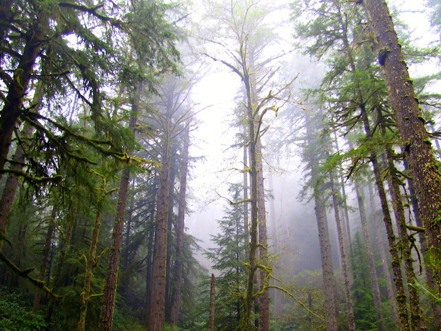 Elliott State Forest (Photo by Tony Andersen)
