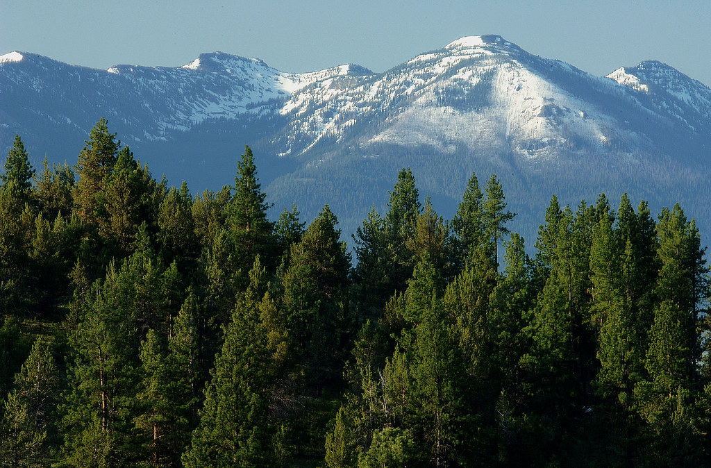 Old Growth Forest Saved from Post-Fire Logging in the Strawberry Mountains