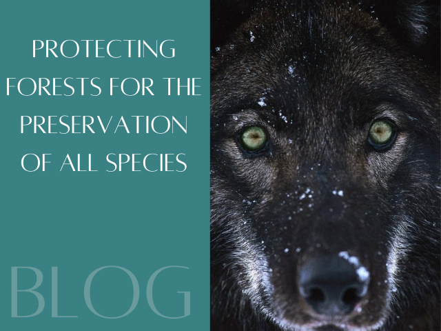 Protecting forests for the preservation of all species