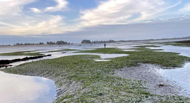 Advocating for Eelgrass Protection