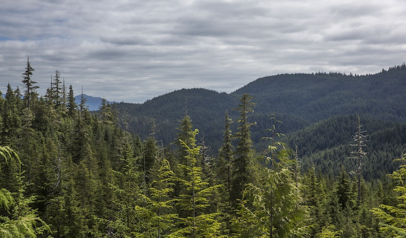 Picture of the Tongass forest with trees in the foreground