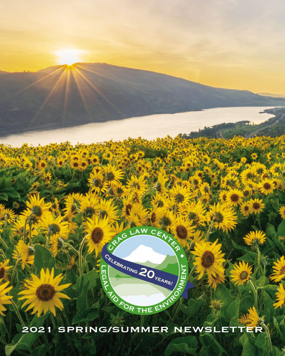 yellow flowers in a field in front of a river and a mountain ridge with the sunsetting over the mountain