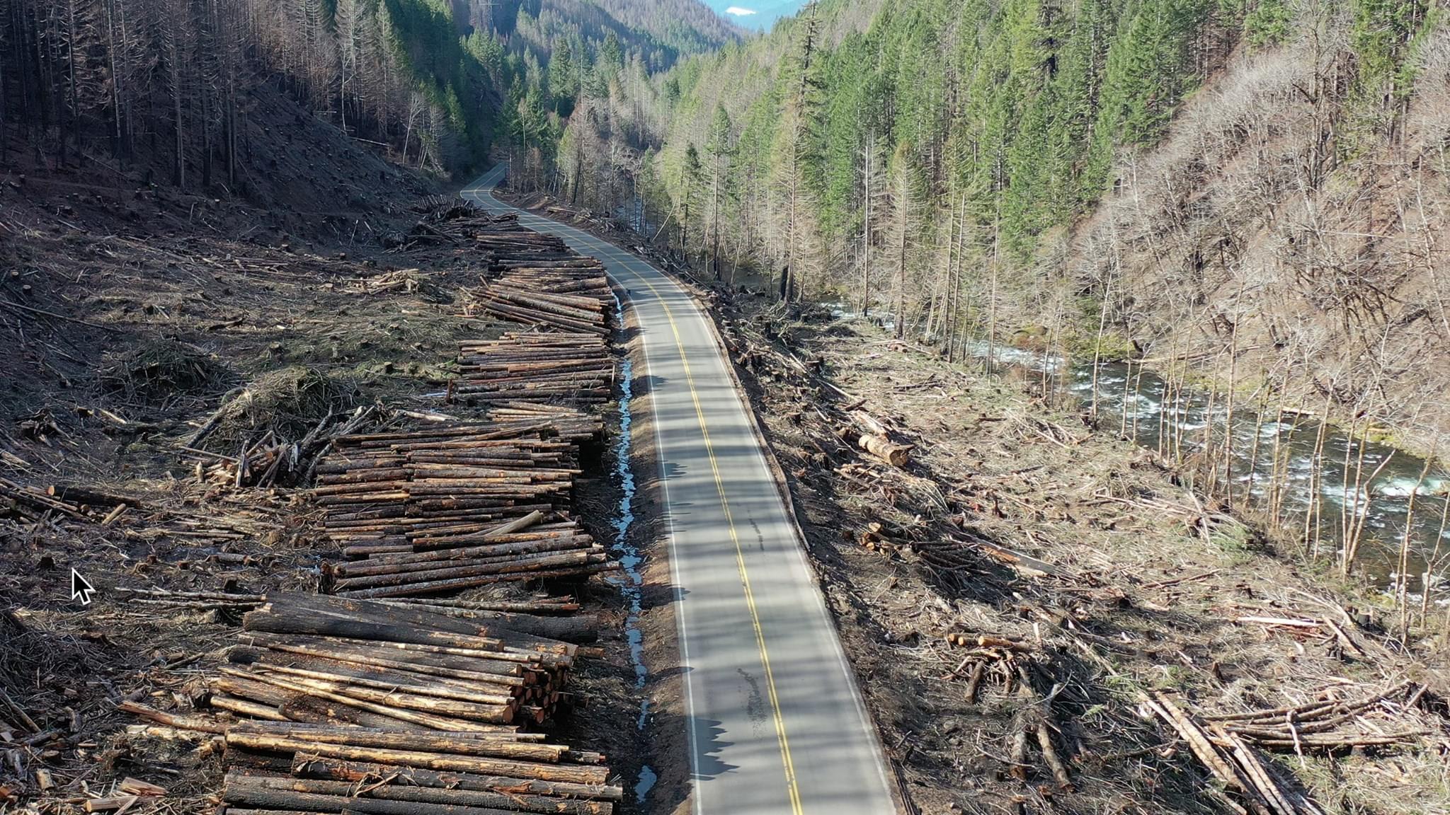 Clearcut trees along Breitenbush Highway