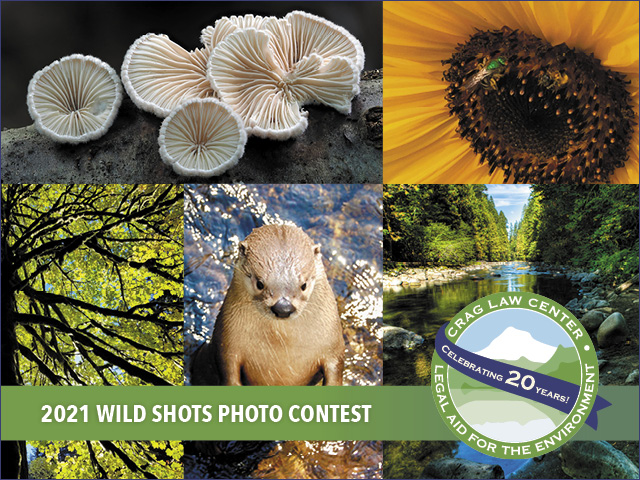 Wild Shots Photo Contest