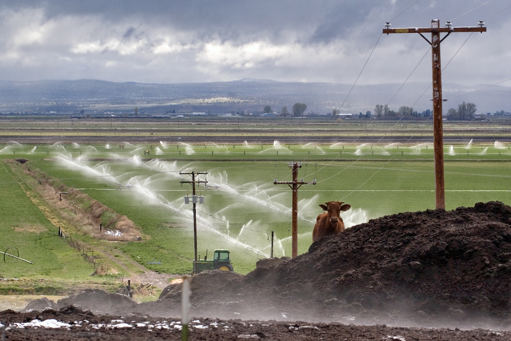 Fields with irrigation water spraying