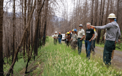 Crag files lawsuit to stop illegal logging after fires